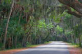 Canopied Road 58274