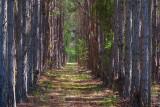 Pine Tree Farm 20070408