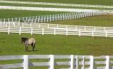 Kentucky Horse Farm 20070413