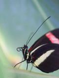 Butterfly 59919