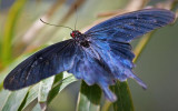 Butterfly 59860