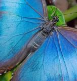 Butterfly 59836