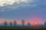 Tree Line At Sunrise 60230