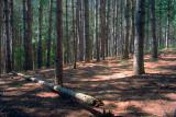 Baird Trail 61539