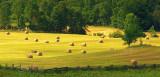 Sunlit Field Of Bales 61455 (crop)