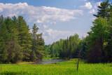 Woodland Scene 61469