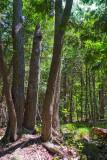 Forest Scene 62248