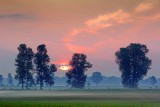 Four Trees At Sunrise 63303