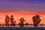 Four Trees At Sunrise 63029