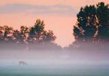 Deer In Dawn Mist 63490