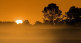 Misty Sunrise 63496