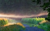 Cornfield Mist 20070801