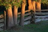 Trees & Fence At Sunrise 20070804