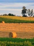 Fields At Sunrise 64649