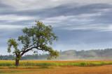 Lone Tree 65717