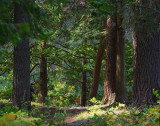 Sun-Dappled Woods 65505