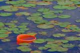 Pail Among Lily Pads 20070905