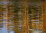 Birch Reflections 20070908