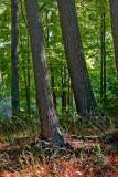 Woods 20070918