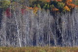 Dead Trees 67473