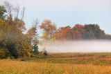 Field Mist 67366