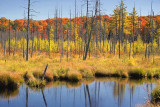 Haliburton Highlands Marsh 67377