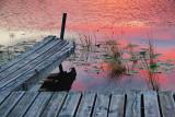 Dock 22 At Dawn 67981