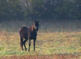 Horse 68217