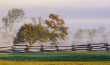 Trees, Fence & Fog 20071005