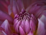Purple Flower 68563