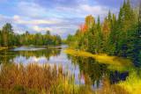 Wetlands 68813