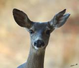 05380 - Deer / ? - CA - USA