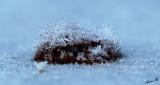 05417 - Ice on a rustiness jut / Yosemite NP - CA - USA