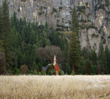 05513 - Little House in the Prairie... / Yosemite NP - CA - USA