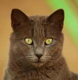 05609 - Sphinx | Cat / Ganey-Tikva - Israel