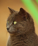 05610 - Sphinx profile | Cat / Ganey-Tikva - Israel