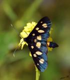 07052 - Blue butterfly / Gamla - Israel