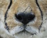 11962 - Cheetah drooling (on us?) / Cheetah park - Namibia
