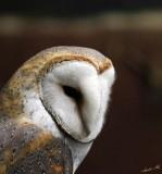 13413 - Owl / Snake park - Arusha - Tanzania