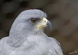 13432 - Eagle / Snake park - Arusha - Tanzania