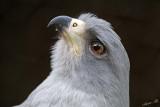 13440 - Eagle / Snake park - Arusha - Tanzania