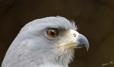 13446 - Eagle / Snake park - Arusha - Tanzania
