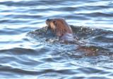 Otter 5689