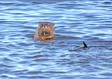 Otter 5699