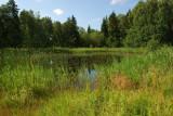 Lake in the wood.jpg