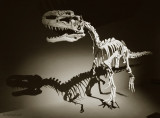 An Extreme Theropod