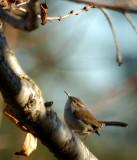 Little bird visits the yard