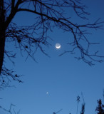 The Young Moon and Venus Setting