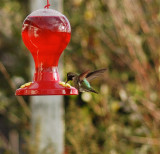 Visiting the new Feeder