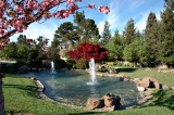 Gardens in Cupertino